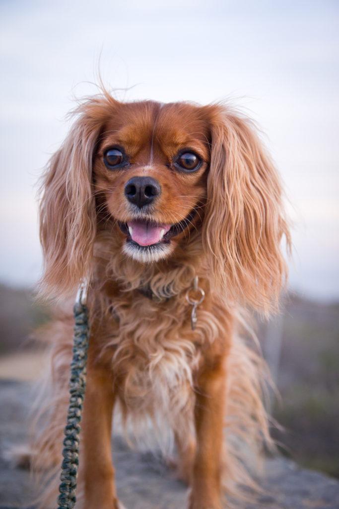 dog walker, dog sitter, pet sitter, pet, pets, dog, dogs, dog walking, pet care, dog hike,