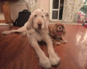 dog walker, dog sitter, pet care, pet sitter, dog walking, cat, kitten, dog, dogs, pet, pets,