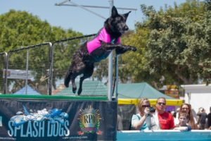 pet expo, pet, pets, pet adoption, dog, dogs, rescue, rescue dog, rescue animals, cat, cats, kitty, bird, cat show, dog show, pup, puppy, oc, oc fair, reptile, cat adoption, doggies, kitty