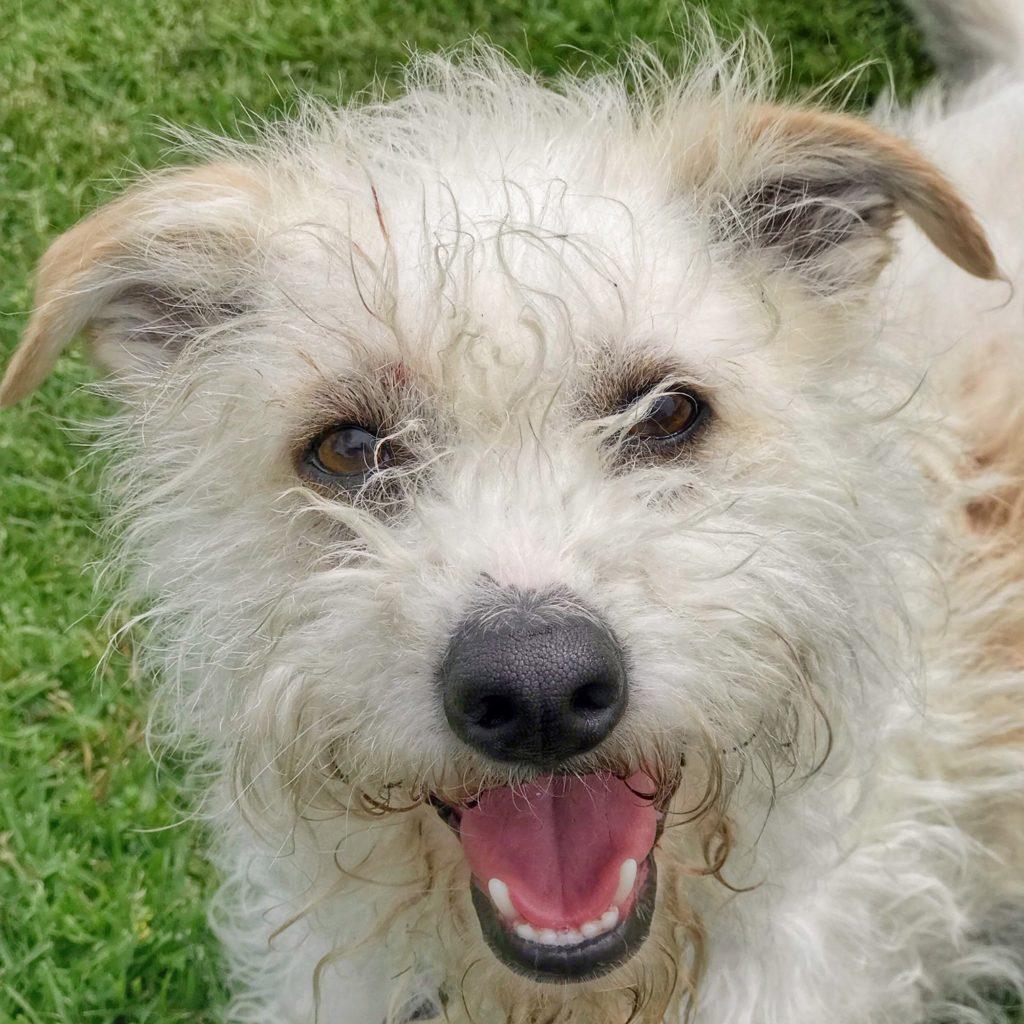 Priceless Pet terrier