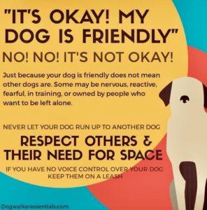 dog, dogs, leashed, unleashed, dog walk, dog walking, dog walker, pet, off leash, pets, dog owner, pup, puppy, doggo