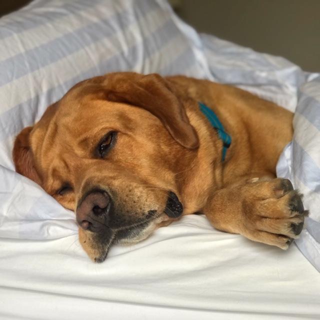dog, dogs, dog walker, pet sitter, dog sitter, Newport Beach dog walker, pet, pets, pup, puppy, dalmatian, dog walk,