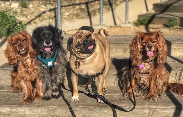 dog, dogs, dog walk, dog walker, newport beach, irvine, pet sitter, rescue dogs,